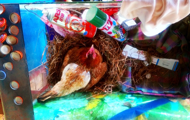 chicken rooster mokita dreams