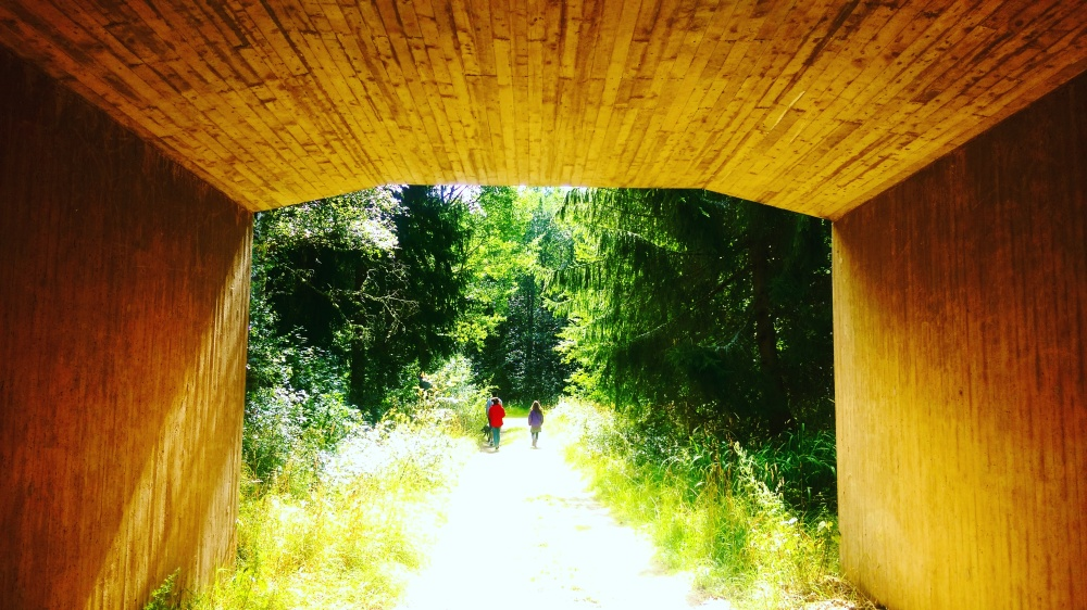 frame mokita dreams walk woods.jpg