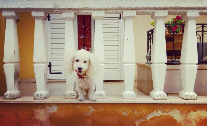mokita-dreams-puppy-dog-house