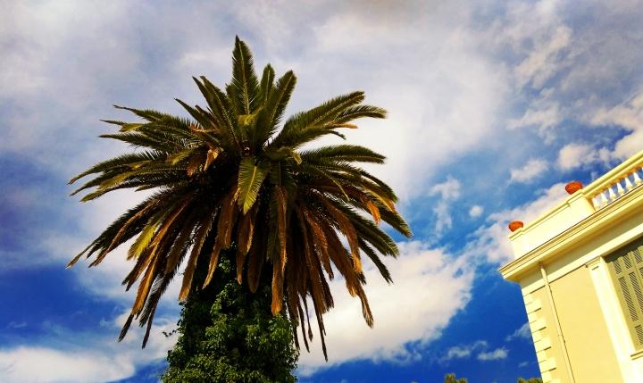 sky-mokita-dreams-palm-building