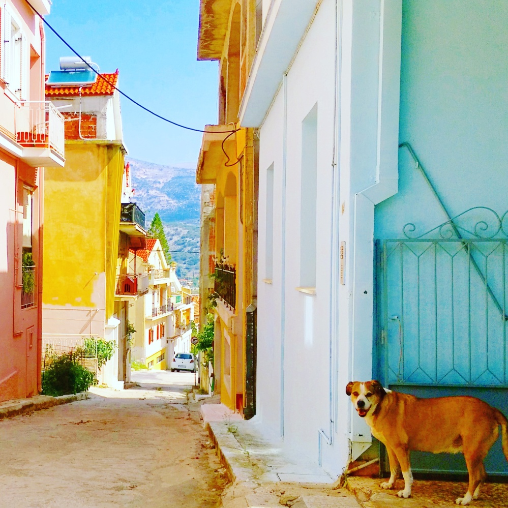 argostoli-greek-town-architecture-dog