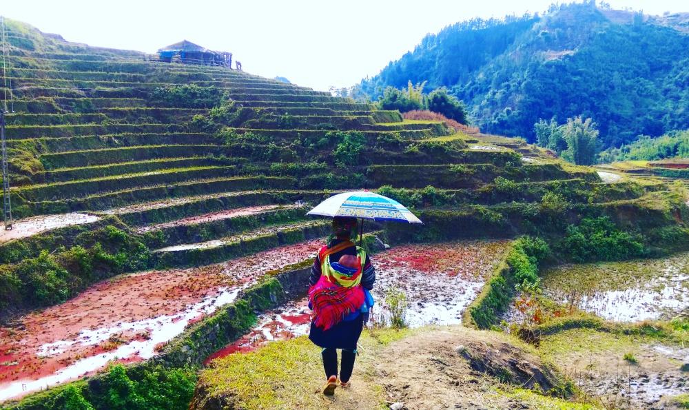 Saps Vietnam Crops harvest.jpeg