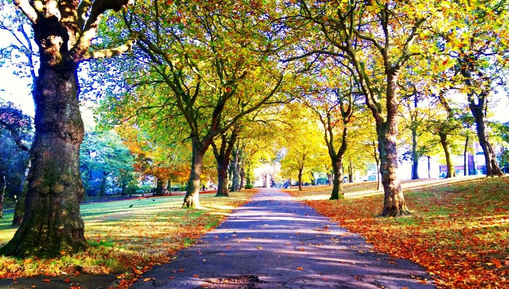 path hyson green autumn colours.jpeg