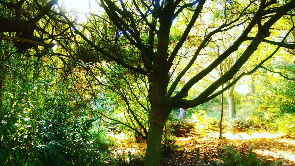 nature golden greens nottingham park.jpeg