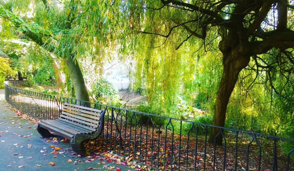 bench chill time arboretum nottingham.jpeg