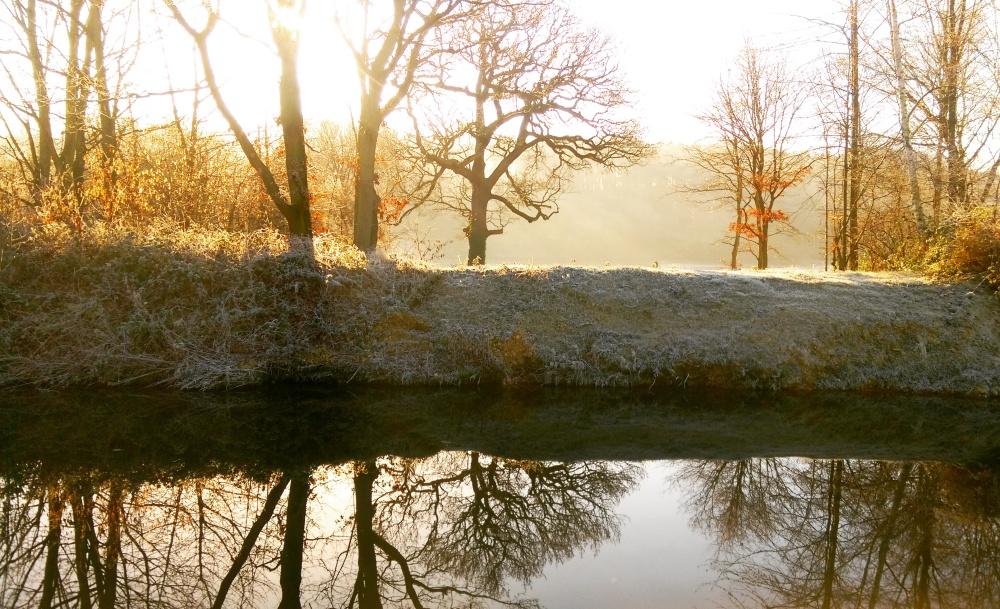 reflection-water-trees-ieva-kambarovaite