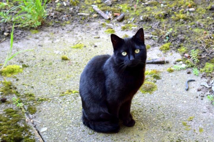 black cat evil staring eyes ieva kambarovaite