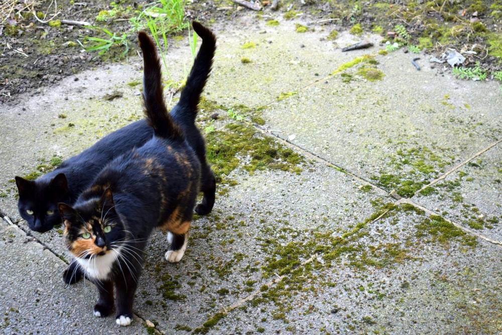 cats black couple ieva kambarovaite
