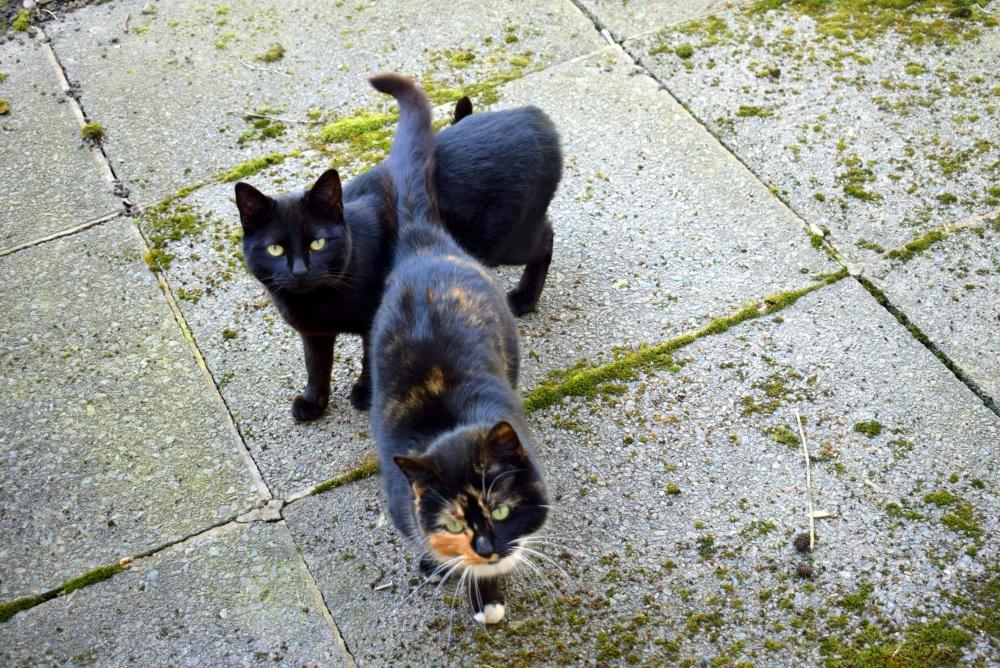 cats friends couple black ieva kambarovaite