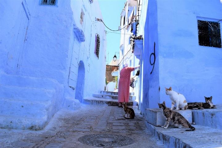 cats lovers crazy cat lady little streets morocco ieva kambarovaite