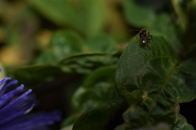 ant close up micro image by ieva kambarovaite