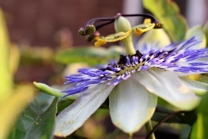 blue flower close up by ieva kambarovaite